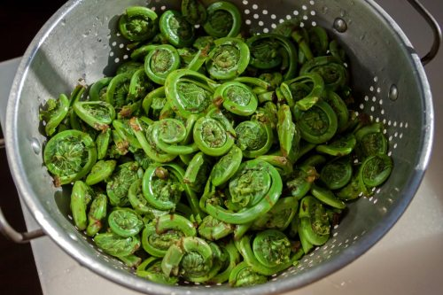 Blanched Fiddleheads