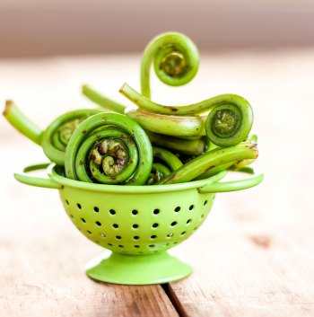 Western fiddleheads in a tiny green colander