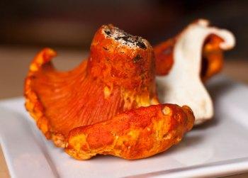 Split Lobster Mushroom