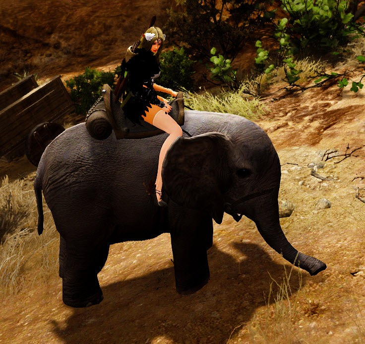 bdo-miniature-elephant-mount