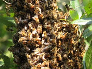 Free Bee Removal in Columbia, SC – Don't Kill those Honeybees!