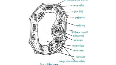ideal plant cells