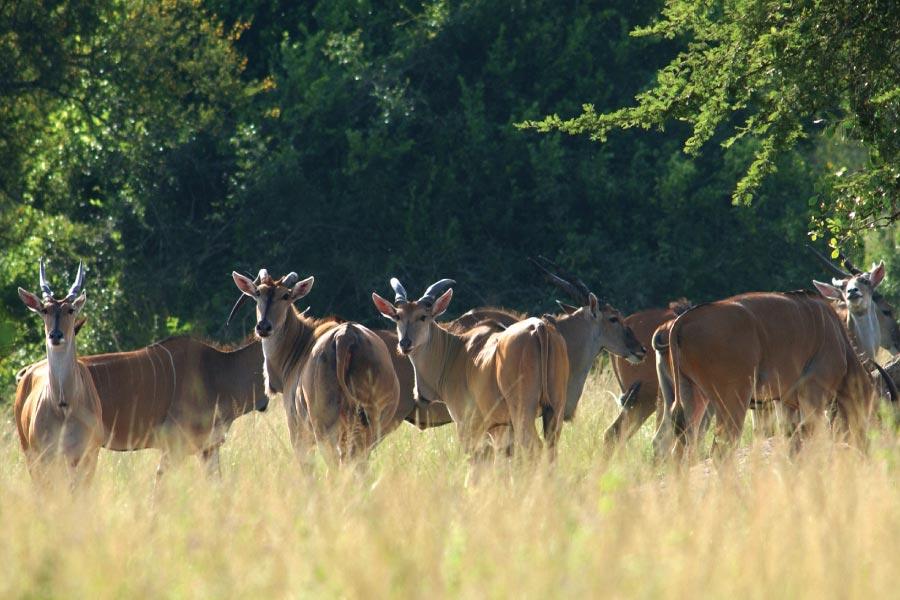 Lake Mburo National Park Safari Uganda