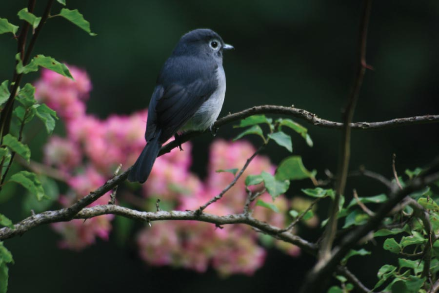kakamega Forest National Reserve Birding