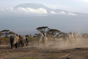 Kenya Safari - Amboseli National Park Kilimanjaro View