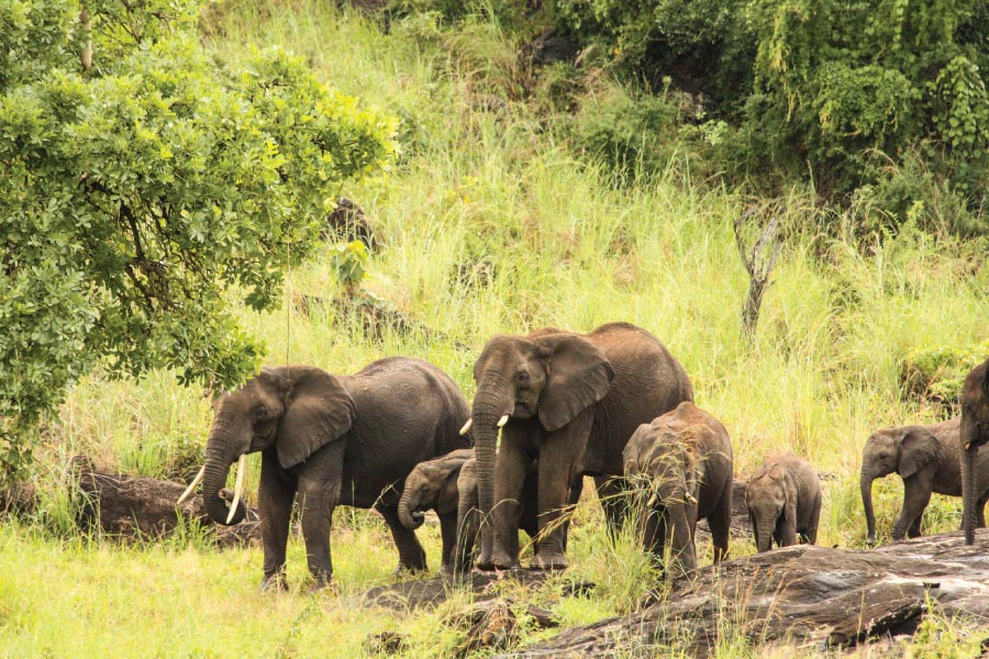 Kidepo Valley National Park Elephants, Savanna Wildlife Safari