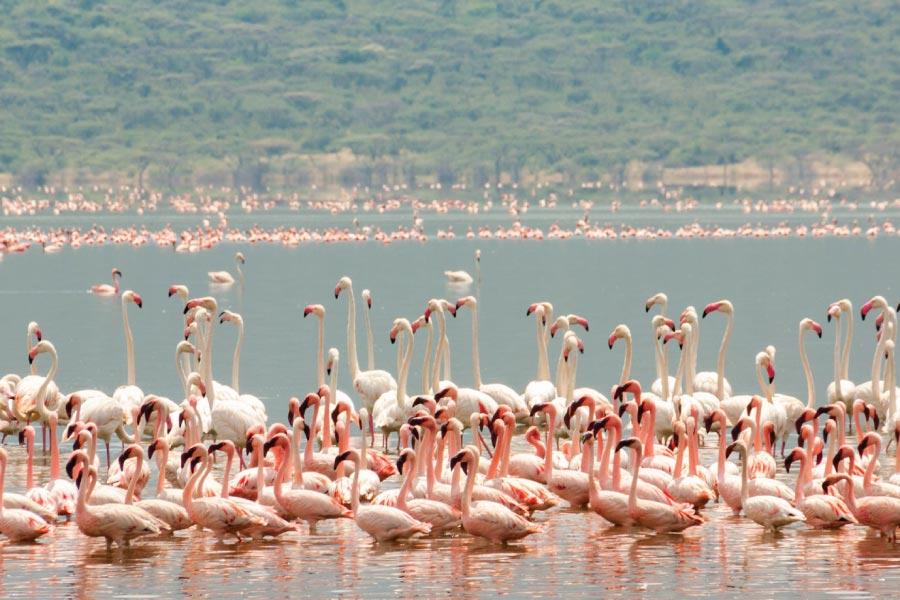 Lake Bogoria National Reserve Flamingos