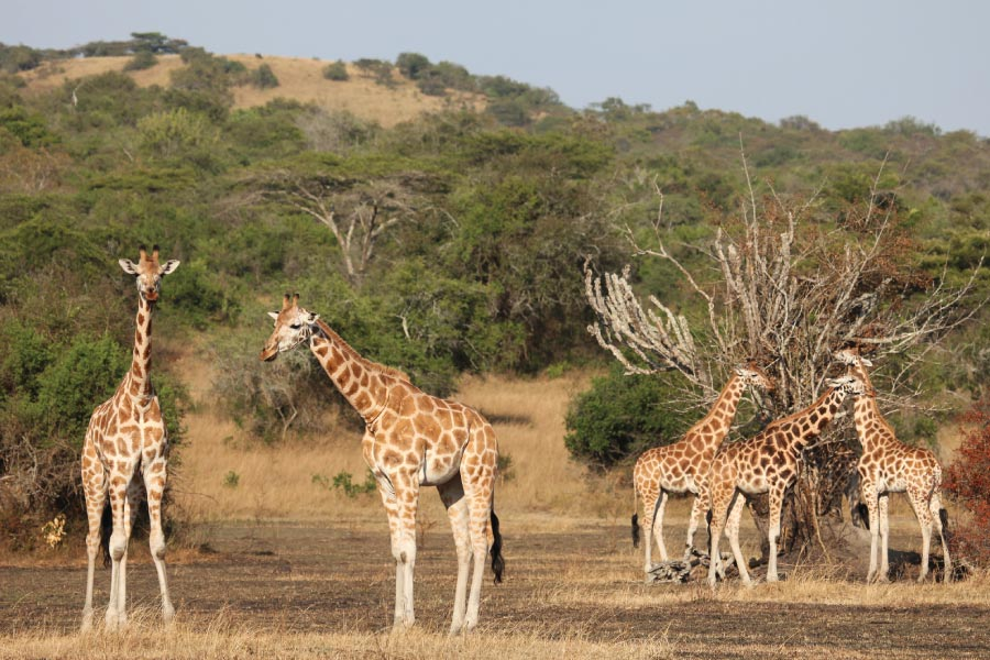 Lake Mburo National Park Savanna Safari, Uganda
