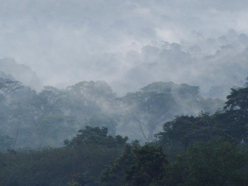Mabira Forest Reserve, Uganda