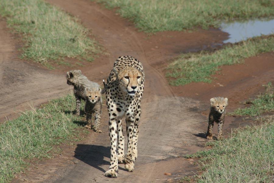 Kenya Safari - Masai Mara National Reserve