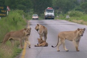 Mikumi National Park - Classic Kenya Tanzania Safari