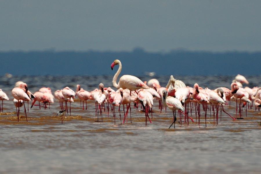 Lake Nakuru National Park Flamingos