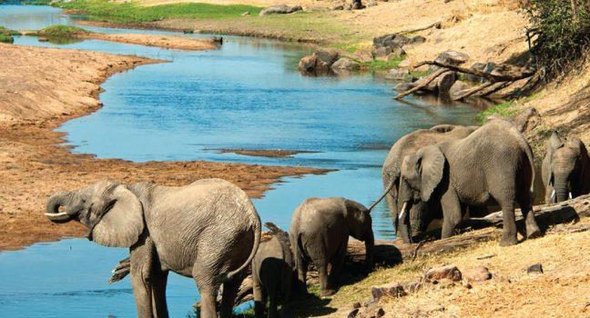 Ruaha National Park