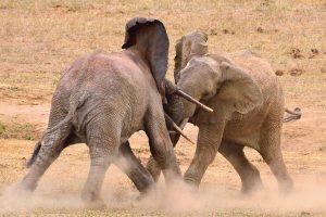 Tsavo National Park kenya - Best of Kenya Safari