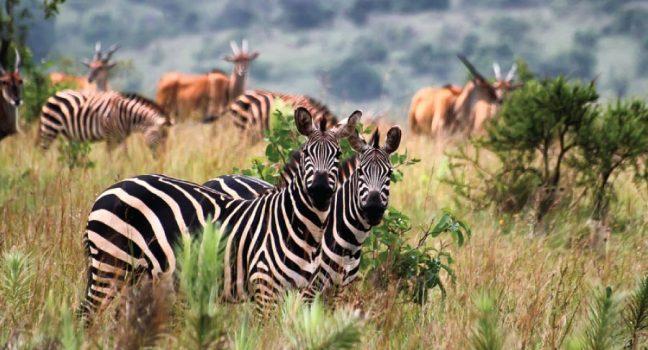 Akagera National Park Rwanda Safari