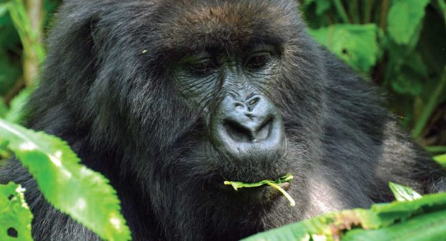 Rwanda Great Apes & Culture Tour