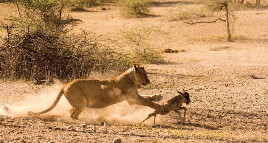 Tanzania Safari Tours