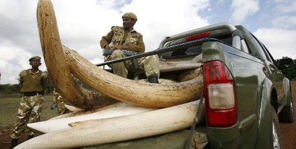 Ivory Poaching -