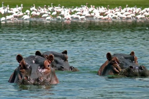Lake Oloidien Naivasha