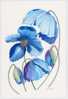 Blue Tulip. Watercolour by Denise Schoenberg