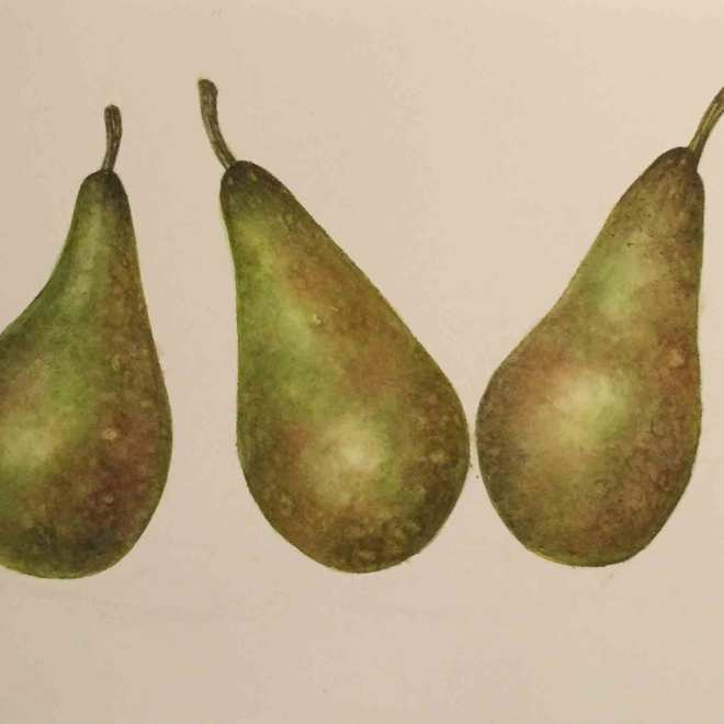 Pears-By-Sarah-McGonigle