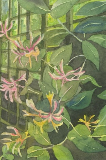 Honeysuckle and Fence by Helen Otter