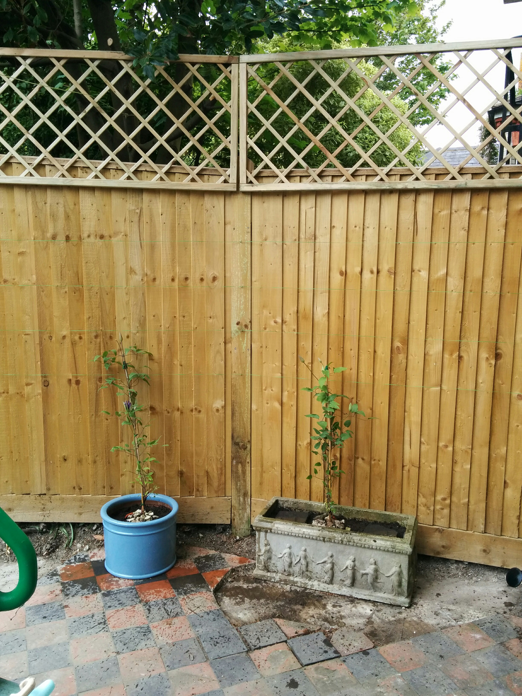 New fence-top trellis & clematis