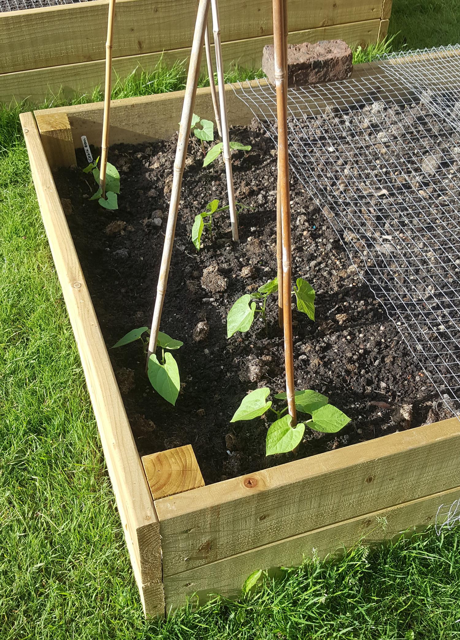 beans 1 - 4 june