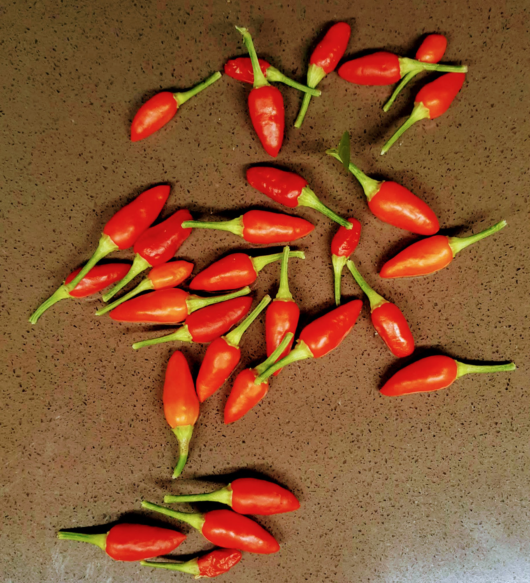 Chillies 'Prairie Fire'