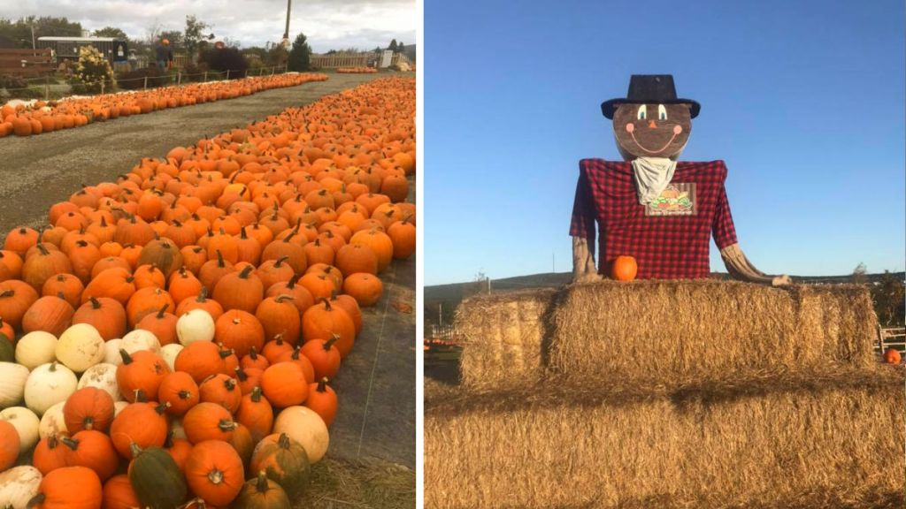 LESTER'S FARM MARKET fall pumpkins and bails