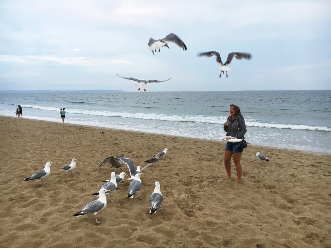 seagulls-oob-east-coast-mermaid