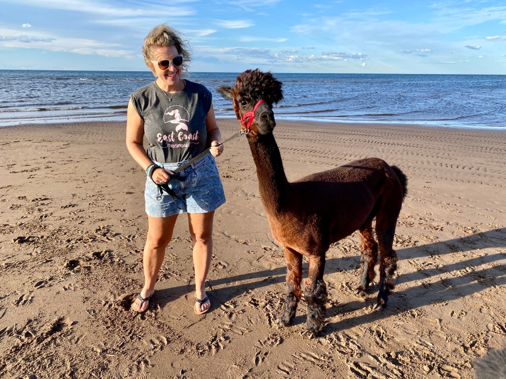 Want a unique Summer Haunts? Check out Llamazing Adventures and walk with a Llama like Crystal Richard is doing in this photo on the beach.