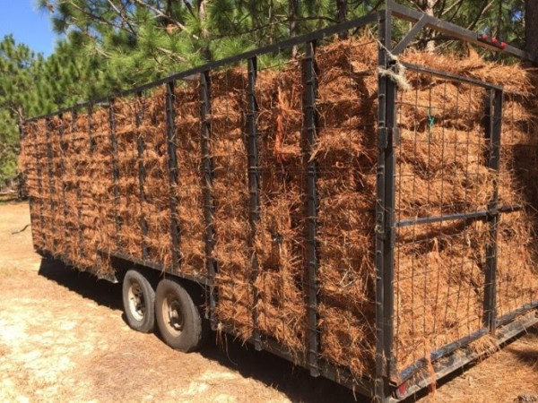 Cobb pine straw scammers