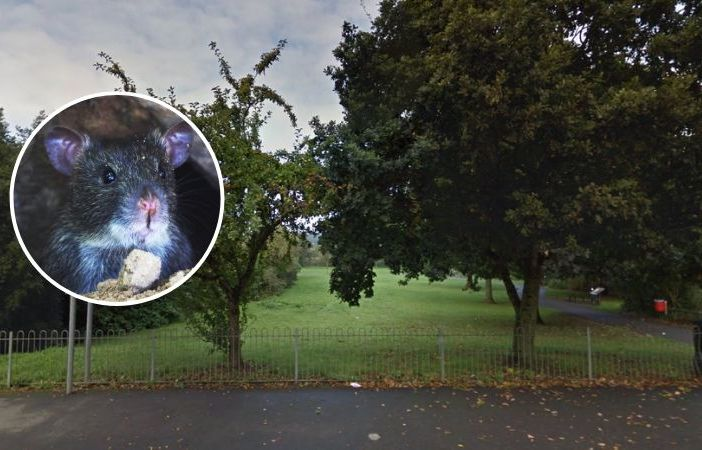Ottery rat - Pest control has been called in over rats at the Land of Canaan in Ottery. Main image courtesy of Google Maps.