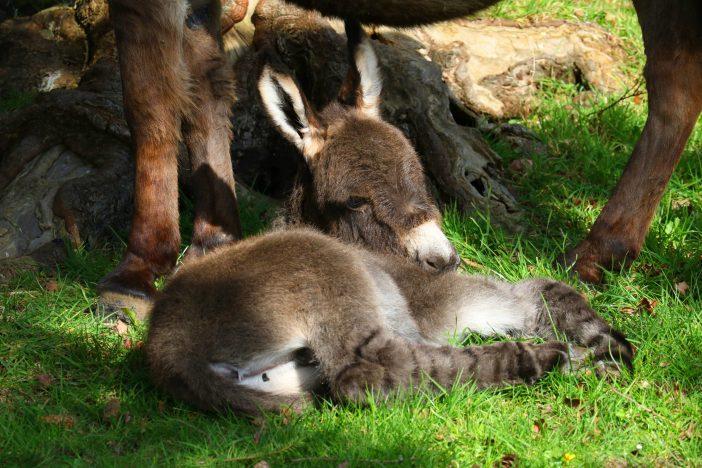 Image: The Donkey Sanctuary