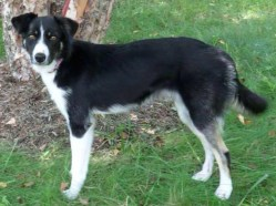Lola - Adopted 2014!