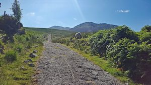"Concrete Road (aka ""Hydro Track"") just above the car park at Breanlee at the start of the Coomloughra Horseshoe hike."
