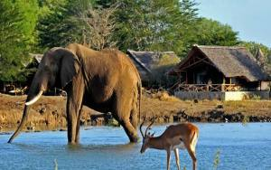 Tsavo East West safari 3 Days from mombasa by road
