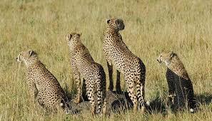 4 days Tsavo east-west-amboseli safari-eastern vacations