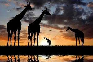 2 Days Tsavo East National Park safari -from kenya beach resorts