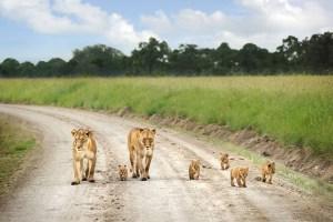 6 Days Lake Nakuru Masai mara Amboseli Tsavo west -Nature and wildlife safari