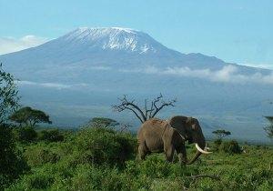 3 Days Tsavo East Amboseli Safari