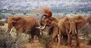 2 Days Tsavo-East-national-park safari