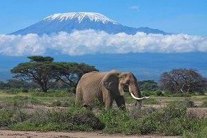 Amboseli Tsavo West safari tour from the kenya beach resorts