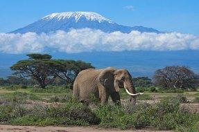 Amboseli_National_Park_Elephant_Mount_Kilimanjaro