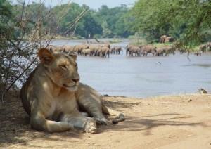 Samburu Air Safari drom Nairobi