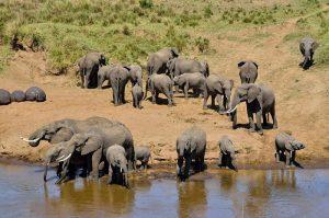 Tsavo West Amboseli National Park Safari in 3 Days from the kenya coast beach resorts