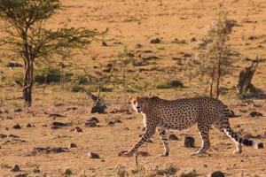 3 days Nairobi masai mara safari by road from nairobi to the home of the big five