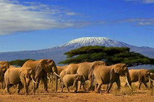 7 Days Magical Kenya Safari Package