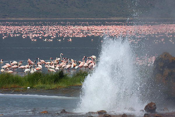 Aberdares Lake Bogoria Lake Baringo Lake Nakuru Masai Mara safari Tours to the great lakes and wildlife hotspot